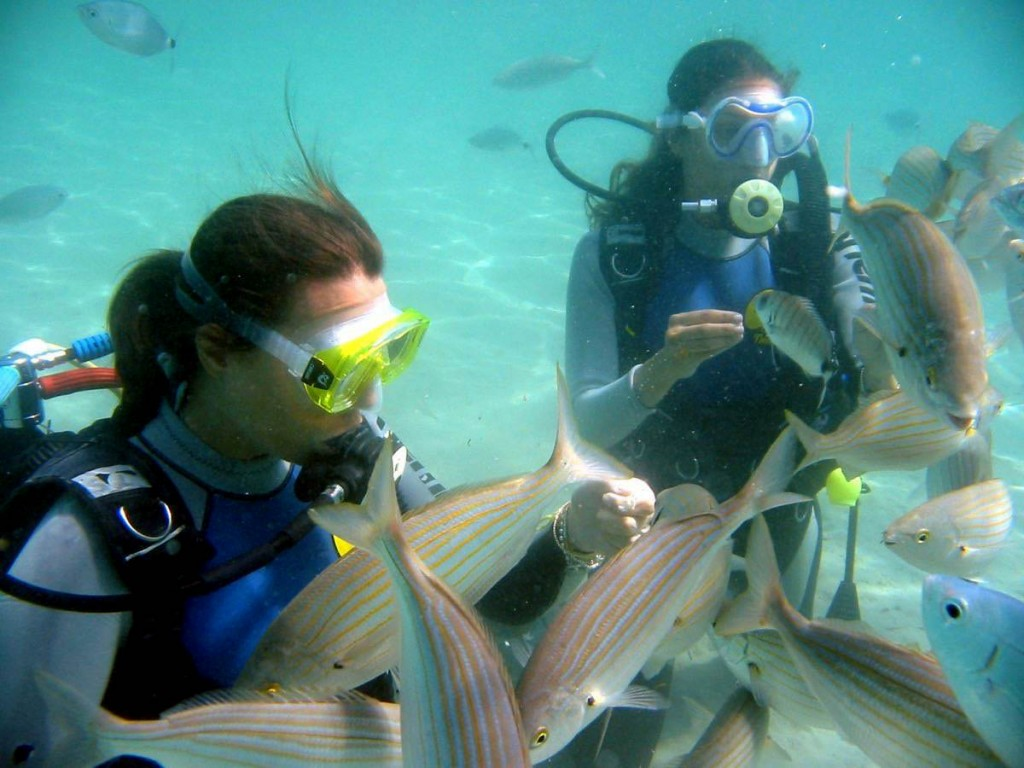 Giada feeding fish