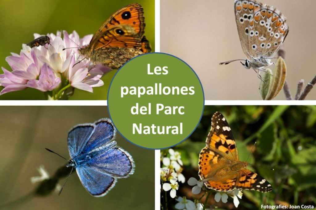 papallones_parc_natural