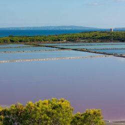 Natura en estat pur, ses Salines d'Eivissa.